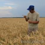 volzsky.ru-gosudarstvo-pomozhet-fermeram-volgogradskoy-oblasti