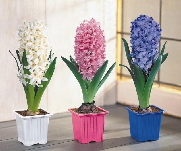 Купить цветы в горшках в москве дешево оптом доставка цветов симферополь цены